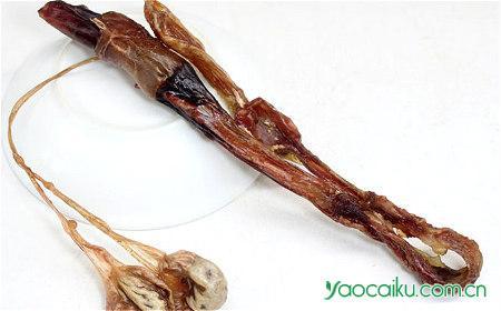 海狗肾鉴别图