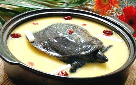 沙苑子蒺藜菟丝甲鱼汤
