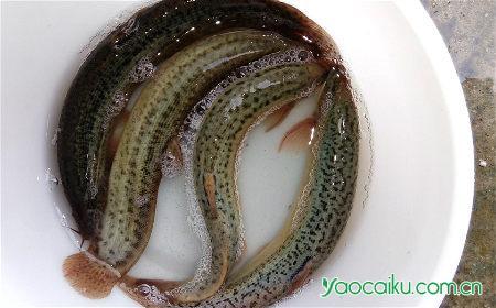 泥鳅壮阳补肾汤